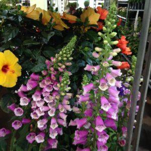 Blumenhalle