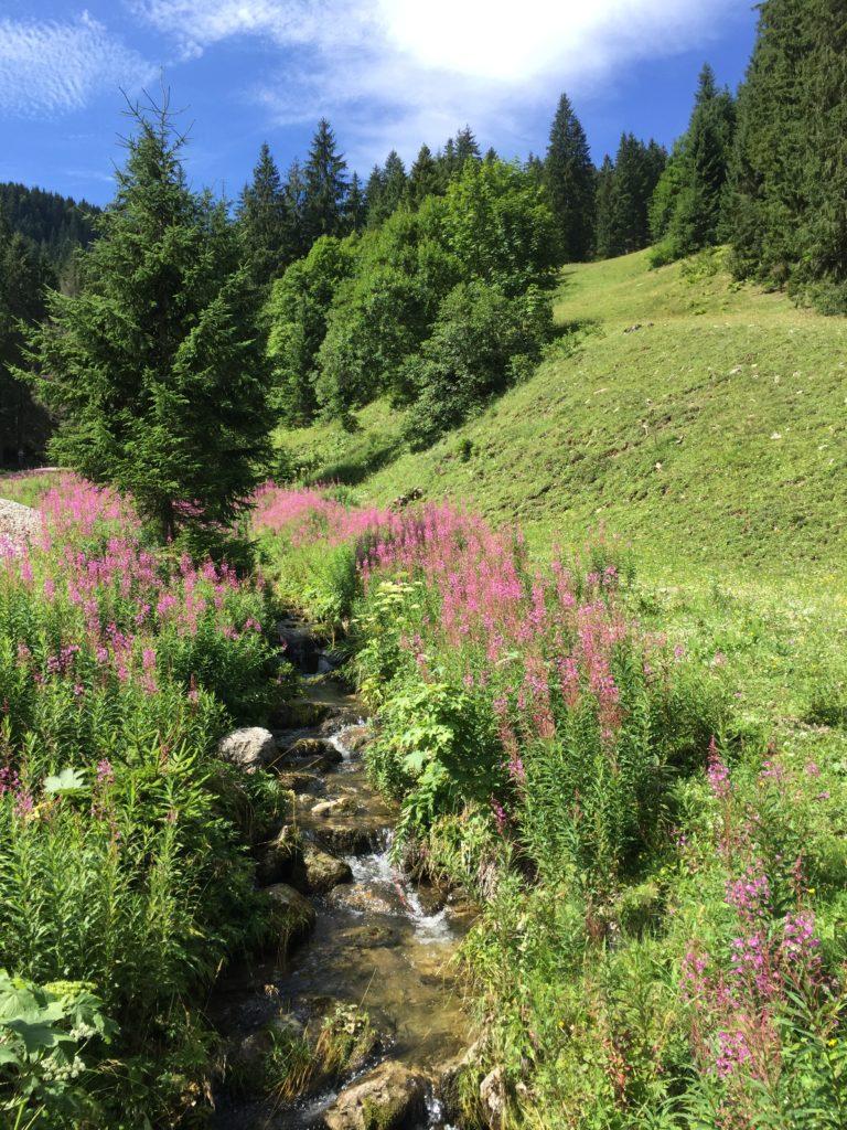 Blühende Wiesen laden zum Wandern ein.